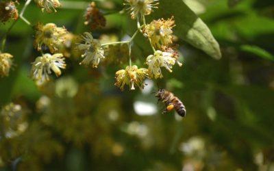 Miel monofloral : de grands crus à découvrir !
