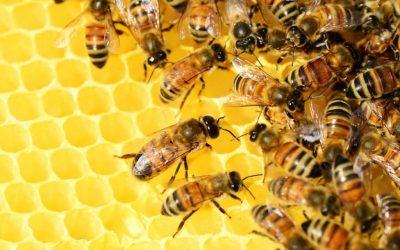 Les multiples bienfaits du Miel