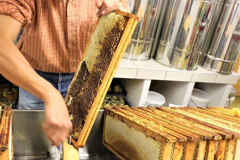 Toutes les étapes de la fabrication du miel